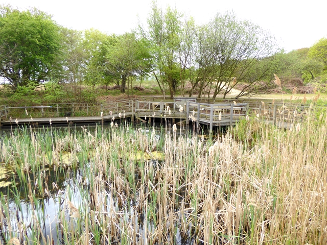Dipping pond, RSPB Minsmere