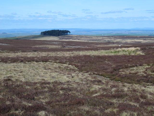 Moorland northwest of Sinderhope Carrs