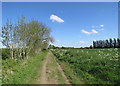 TL4265 : Near Lamb's Cross on Gun's Lane by John Sutton