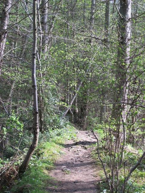 Path in Deneholme Wood