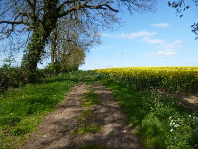 Bridleway to Faxton