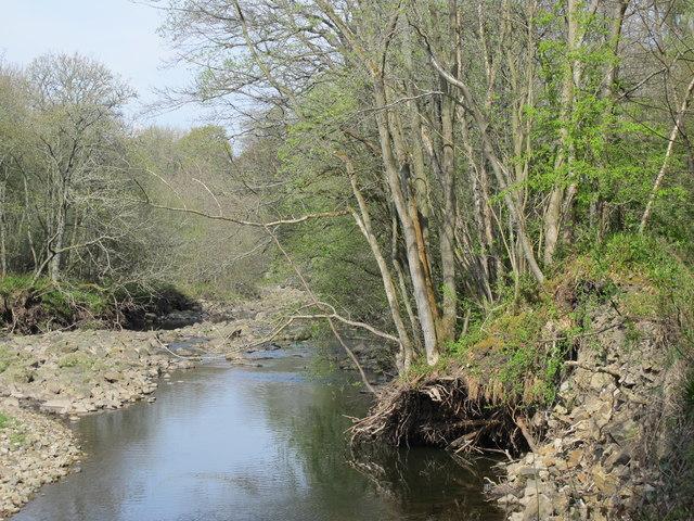 The River East Allen by Lowmill Haughs