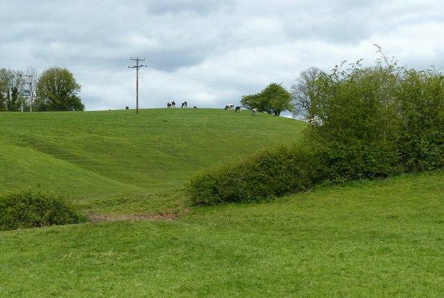 Landscape near Oakgrove