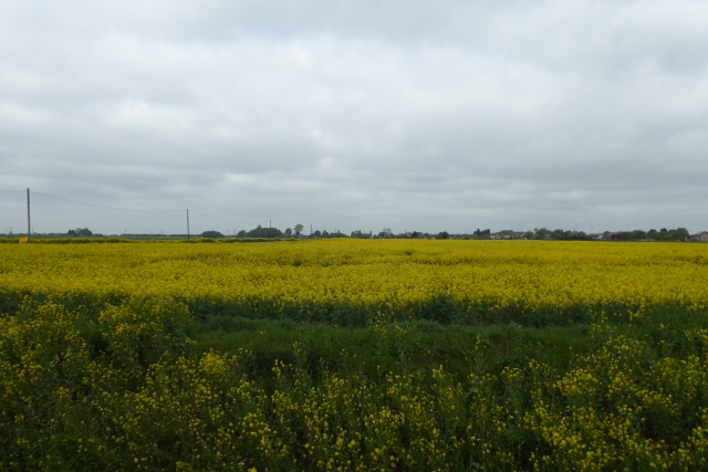 Farmland near Burringham