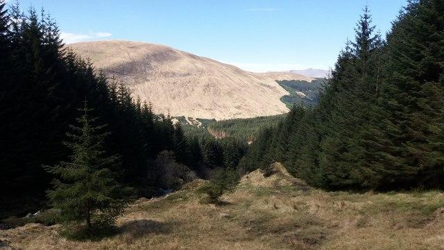 Path through the forest in Glen Lochy