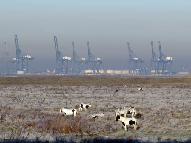 Horses on Ferry Marshes