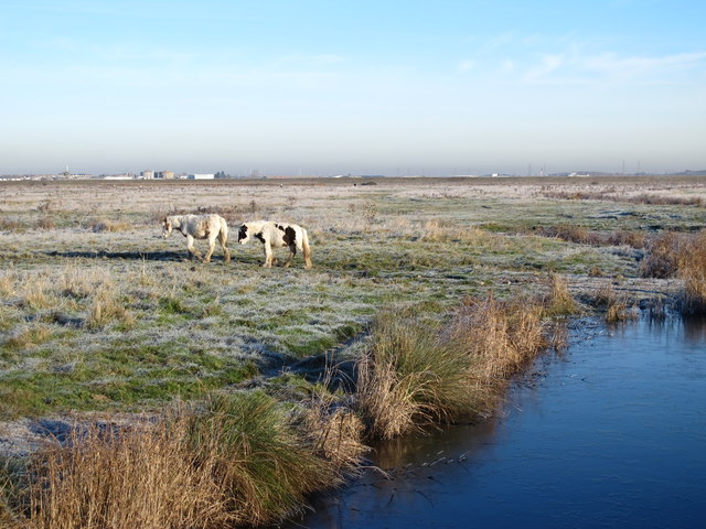 Ferry Marshes (2)