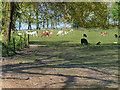 SD7012 : Pasture at Smithills Open Farm by David Dixon