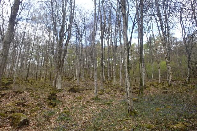 In Rainsbarrow Wood