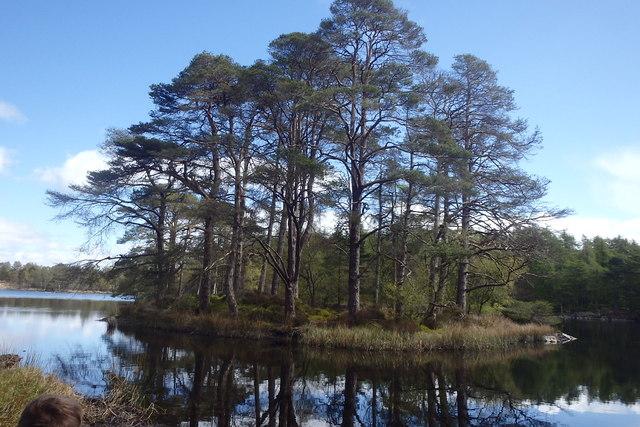 Pine Clad Island