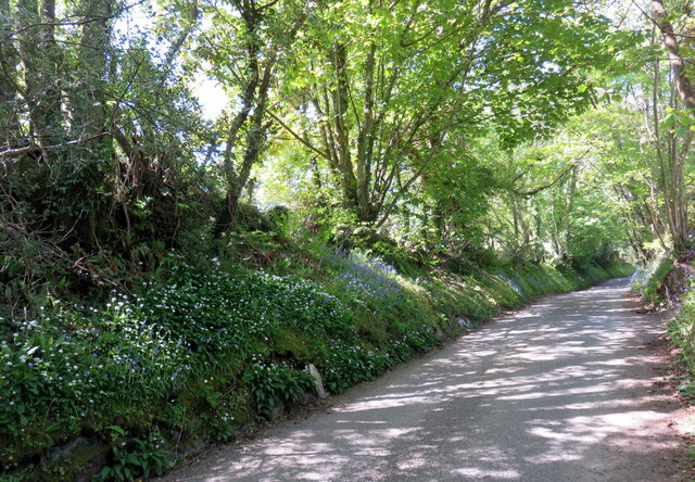 Flowery lane