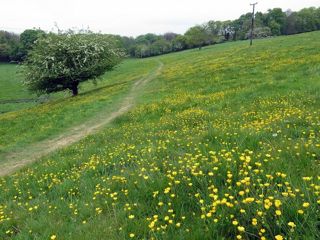 Path through the buttercups below Heddon Hall