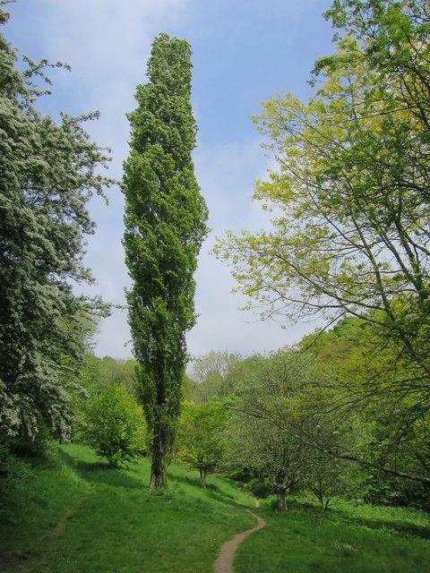 St Helens Park
