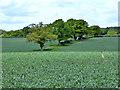 TL2020 : Farmland north-west of Three Houses Lane : Week 20