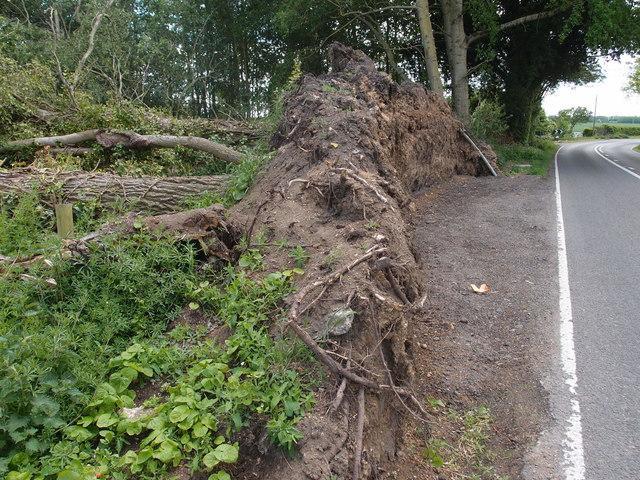 Tree upheaval