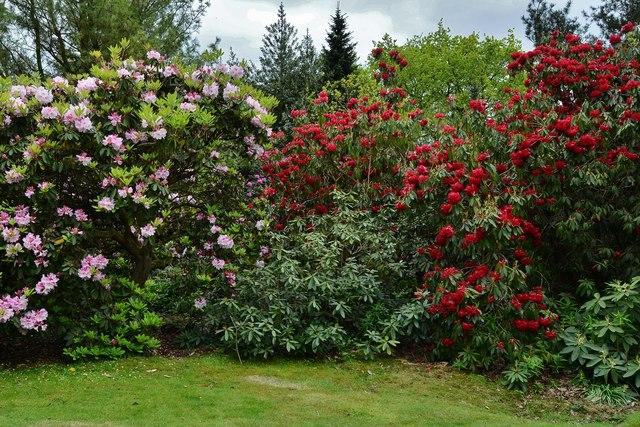 Riverhill Himalayan Garden: Rhododendron 3