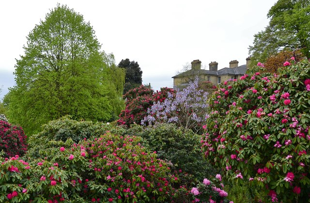 Riverhill Himalayan Garden: Looking towards the house from the Rose Walk