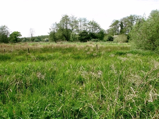 Swampy ground at Low Common