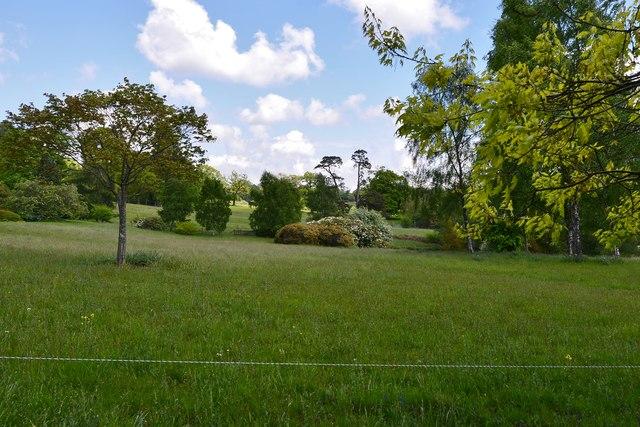High Beeches Garden: The Wild Flower Meadow