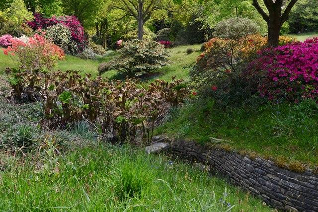 High Beeches Garden: Queen Mary's Walk