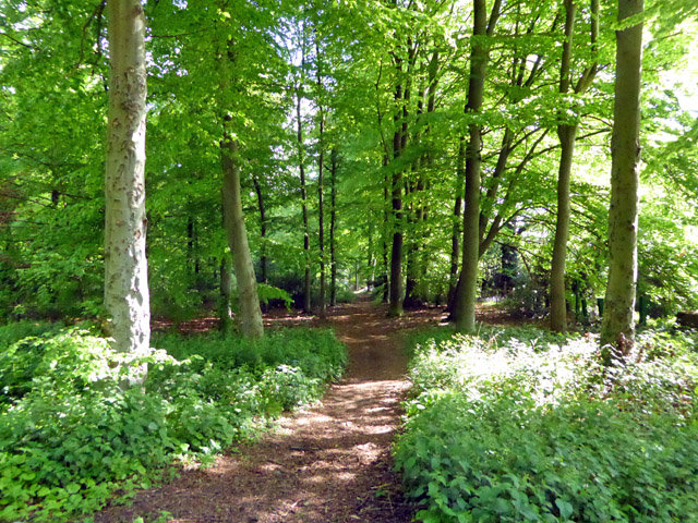 Path, Potterscrouch Plantations