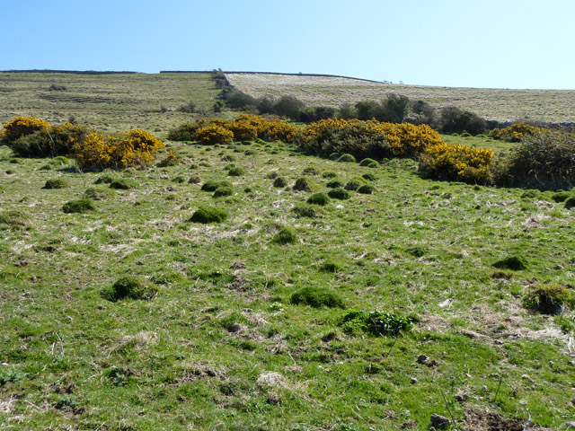 Anthills and gorse