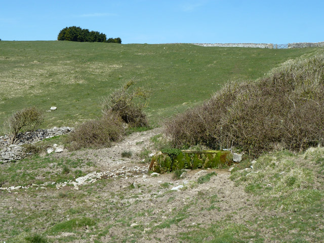 Spring and cattle trough