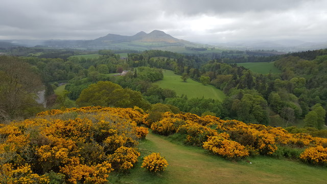 Scott's View in springtime with the Gorse in flower