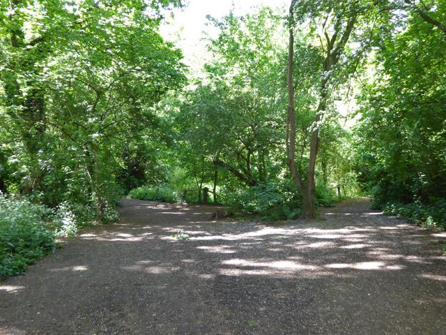 Paths, Wick Wood