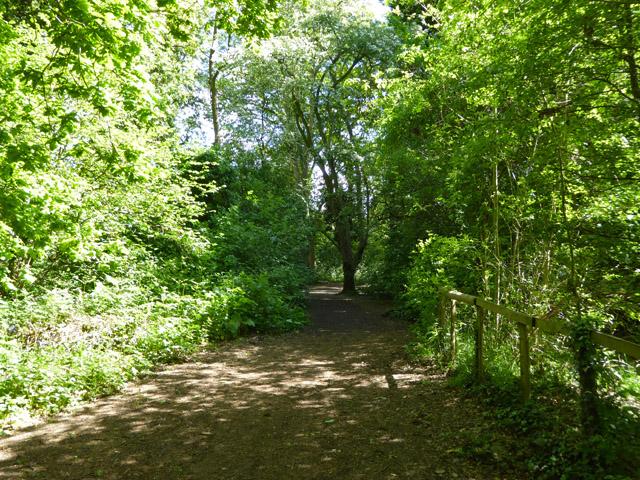 Path, Wick Wood