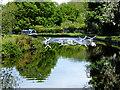 SJ2936 : Geese landing on the Llangollen Canal by John Lucas