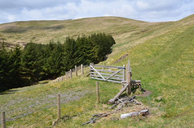 End of forest track, Bught Hill