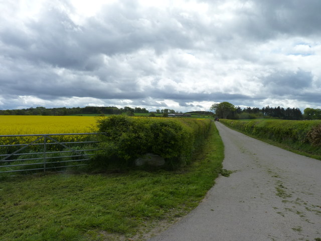 Road to Cadboll Mount farm