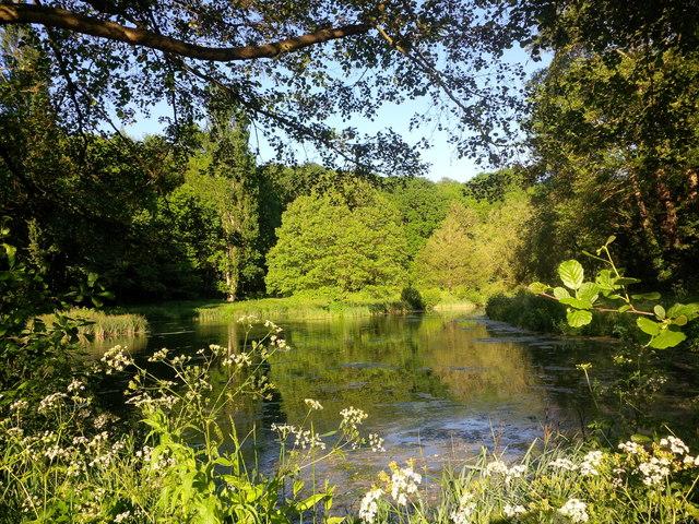 Man-made lake for wildlife at Haygrove