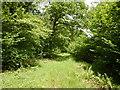 SU8273 : Track in Surrells Wood by James Emmans