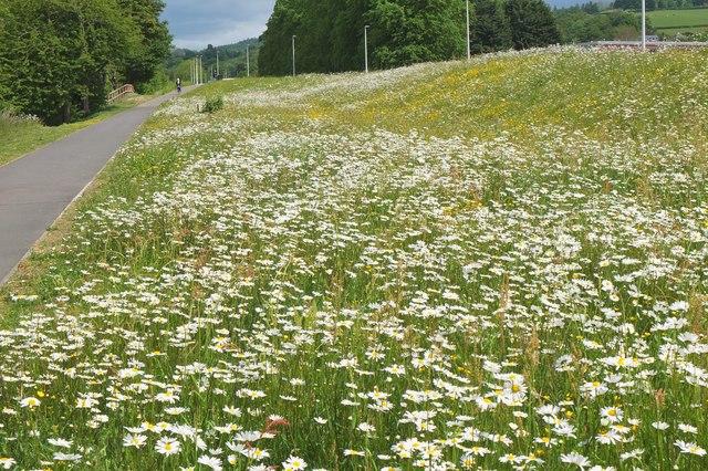 Flowers by the Ettrick Water, Selkirk
