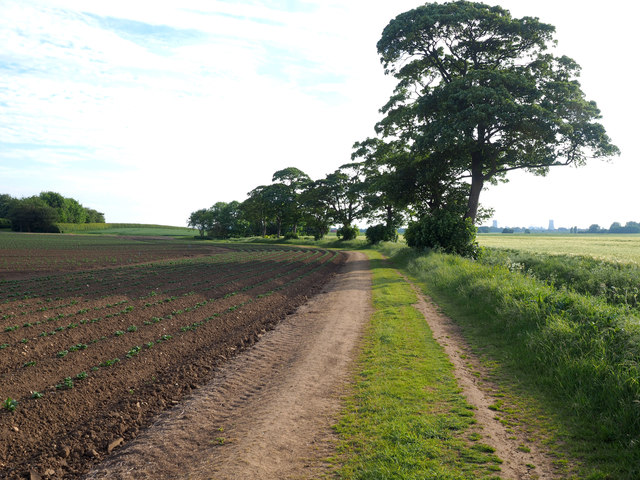 Footpath and Trees north of Nuthill Farm