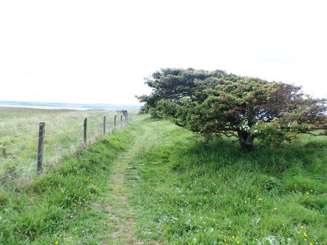 Footpath on Lindisfarne