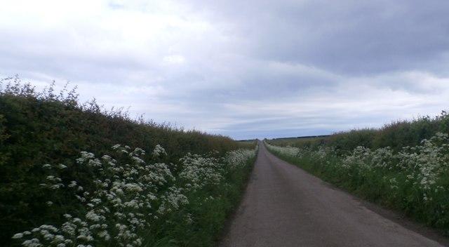 Ingham Lane