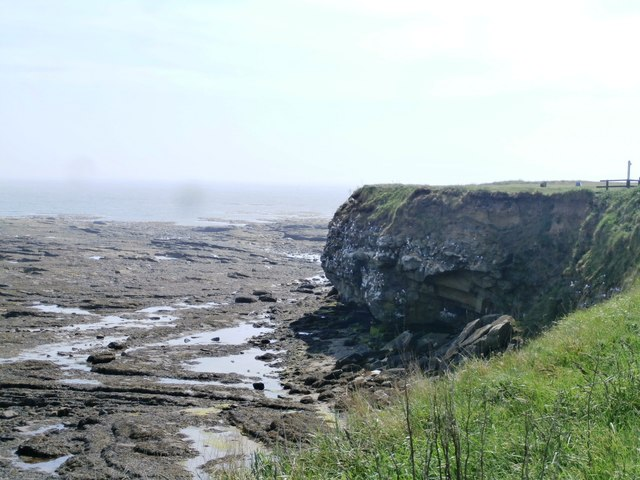 Kittiwake Colony at Braidcarr Rocks - Seahouses