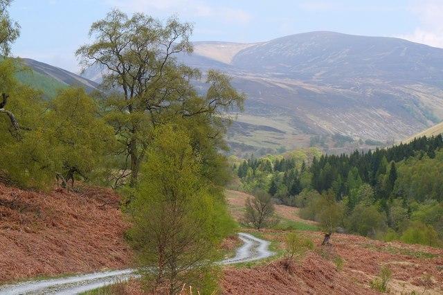 Track in Glen Tilt