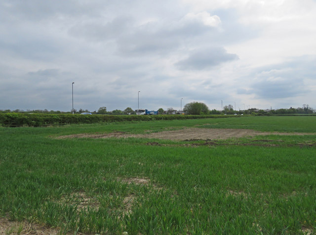 Field south of Rogue's Lane