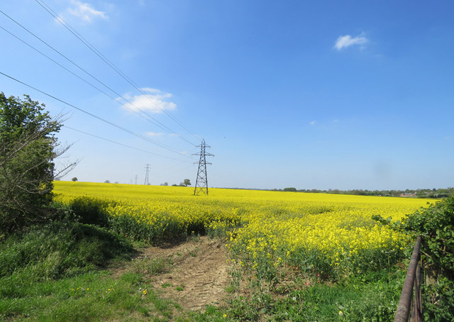 Pylons and oil seed rape by the Fosse Way