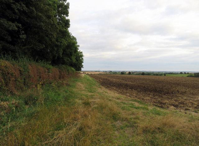 Edge of the wood southwards
