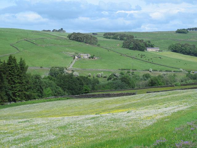 Upland hay meadow north of Broad Gate Farm (2)