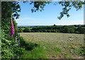 SX4170 : Hay Field near Todsworthy Farm by Des Blenkinsopp