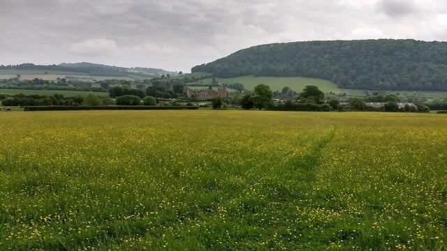 Stokesay Castle seen across a field of buttercups