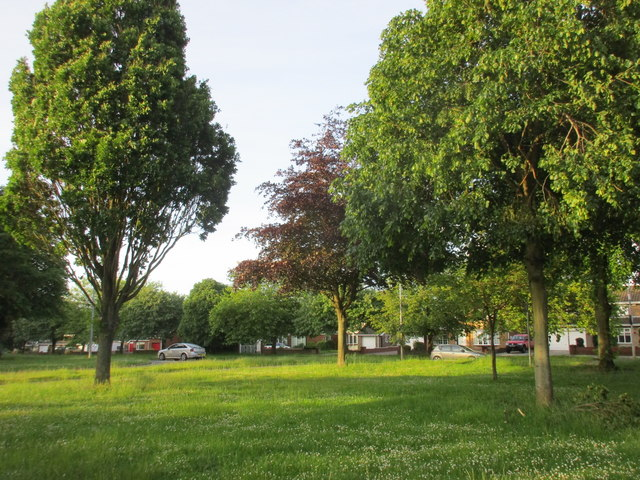 Amenity grass and trees