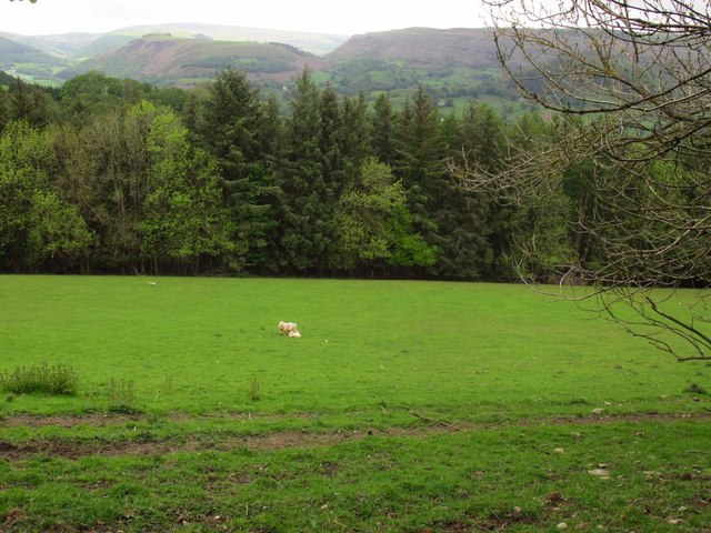 Solitary sheep and lamb