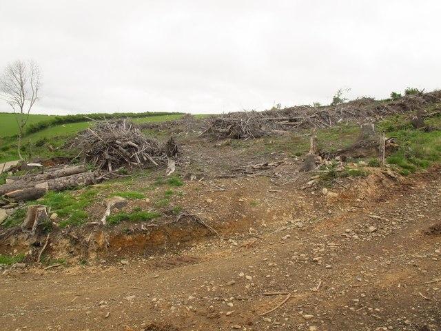Felled trees near Pen Lan